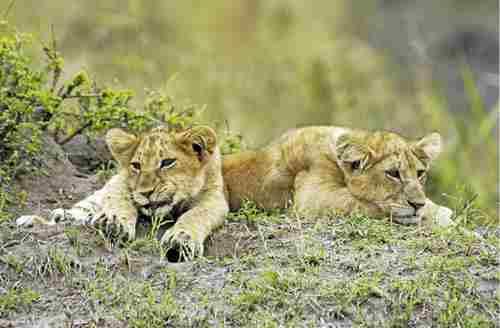 南非徒步狩猎